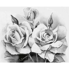 Pencil rose drawing for with writing on invites