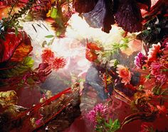 Margriet Smulders – Photographic Masters  By Patternbank On August 15, 2012 · In Inspiration