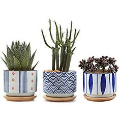 3 Inch Ceramic Japanese Style Succulent Pot Set with Free Bamboo Tray Pack of Cactus Planter Home and Office Decoration Desktop Windowsill Bonsai Pots Gift for Gardener Wedding Christmas – BABIES ITEMS