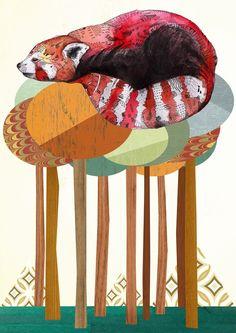 Red Panda, Sandra Dieckmann Illustration