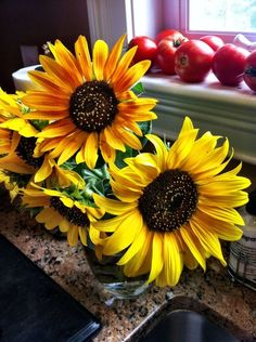 Sunflowers 'n tomatoes
