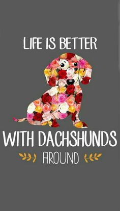 Dachshund Quotes, Mini Dachshund, Daschund, Funny Dogs, Cute Dogs, Winnie Dogs, Dog Jokes, Dog Lady, Cute Creatures