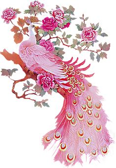 Pink Peacock - would love this picture to hang in my bathroom