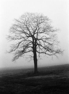 Black and White Tree in Winter Silhouette