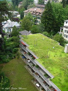 Green Roof, Bern, Switzerland (2007).  Photo: fabbiomenna via Flickr