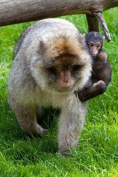 Solidaridad entre especies…-Amor animal #vientos del alma #