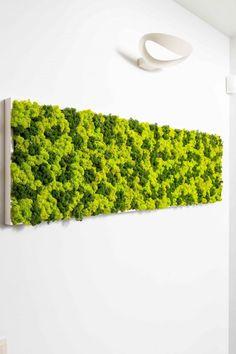 The Reindeer moss (aka. Lichen) is perfect for any interior green wall or vertical garden look alike. Moss Wall Art, Moss Art, Wall Art Decor, Plant Wall, Plant Decor, Foam Crafts, Craft Foam, Moss Graffiti, Styrofoam Art