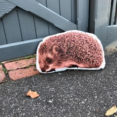 hedgehog pillow Jungle Animals, Woodland Animals, Pet Gifts, Baby Gifts, Hedgehog Bedding, Unusual Animals, Woodland Nursery, Gifts For Boys, Snuggles