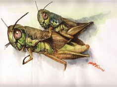 insect painting - Google Search
