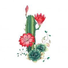 Atlas de Cactus y Suculentas set Premium-Vector Cactus Drawing, Cactus Painting, Cactus Art, Cactus Decor, Cacti And Succulents, Cactus Plants, Indoor Cactus, Indoor Plants, Watercolor Flowers