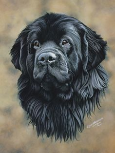 #Newfoundland #Newfie #NewfoundlandArt Newfoundland, Labrador Retriever, Dogs, Animals, Art, Labrador Retrievers, Art Background, Animales, Animaux