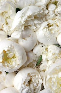 A bouquet of fresh white peonies