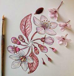 Flowers in Progress: Scientific Illustrator, Noel Badges Pugh … Illustration Botanique, Botanical Illustration, Illustration Art, Landscape Illustration, Flower Drawing Tumblr, Drawing Flowers, Illustrator, Plant Drawing, Motif Floral