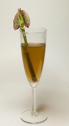 Japanese Knotweed Recipe - Knotweed Wine
