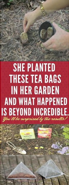 She Planted Some Tea Bags In Her Garden, And What Happened Next Is Beyond Incredible. Natural Health Tips, Health And Beauty Tips, Wellness Fitness, Fitness Diet, Wellness Quotes, Physical Fitness, Health Fitness, Tired Eyes, Belly Fat Workout