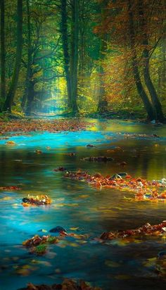 Magic light in the Spessart Mountains of Bavaria, Germany.