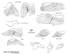 So I was ask if i could do a tutorial on how to draw wings and decide to get it all done today so i wouldn't be working on it during school. How to Draw Wings by Wing Anatomy, Anatomy Drawing, Anatomy Art, Raven Wings, Bird Wings, Figure Drawing, Drawing Reference, Animal Drawings, Art Drawings
