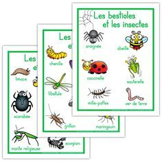 Affiches, les bestioles et les insectes