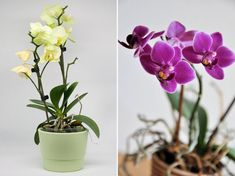 Orchids, Neon, Garden, Plants, Garten, Lawn And Garden, Neon Colors, Gardens, Plant