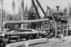 Steam donkey loading rail cars with logs.