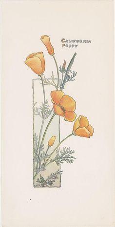 Eschscholzia (Papaveraceae). California Poppy print, c. 1900. By Elizabeth Hallowell Saunders (1861-1910). Santa Barbara Botanic Garden