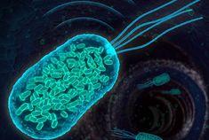Onewstar: Pronti i primi batteri-sottomarino, seguiti con i sonar
