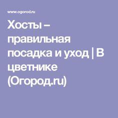 Хосты – правильная посадка и уход   В цветнике (Огород.ru)