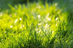 Fresh Green Grass photo Free Full HD Wallpaper Download Wallpaper picture