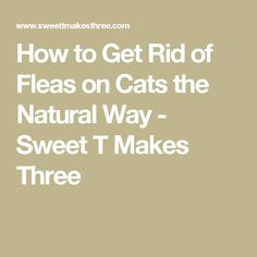 Flea remedies for cats and dogs don't have to be toxic! Using essential oils for fleas on cats and dogs is a natural, economical way to kills fleas. Make your own essential oil flea repellent to save money and cut out chemicals. Ingrown Hair Remedies, Ingrown Hairs, Get Rid Of Bruise, Homemade Gnat Trap, Essential Oils For Fleas, How To Get Rid Of Gnats, Health Tips, Health And Wellness, Flea And Tick Spray