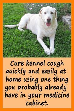 Curing Kennel Cough Can Be Done Easily At Home With This One Product Most People Have In Their Medicine Dog Cough Remedies Dog Coughing Kennel Cough Treatment