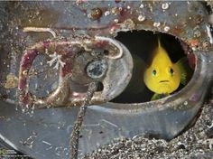 fish in a soda can