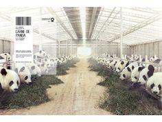 CCSP: Campanha impressa