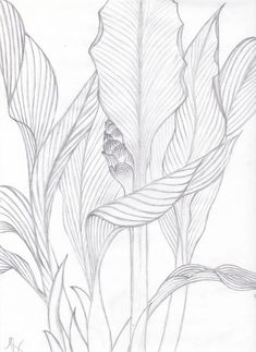 Flower Drawing Visualization Basics Tropical Leaves Contour Drawing from life Leaf Drawing, Plant Drawing, Painting & Drawing, Nature Drawing, Tropical Art, Tropical Leaves, Ink Drawings, Drawing Sketches, Contour Drawings
