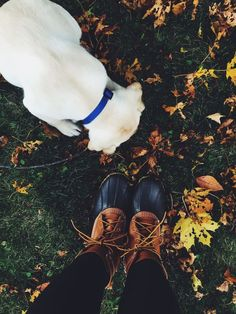 Puppy walks and Fall boots