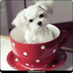 Kopje thee met iets liefs