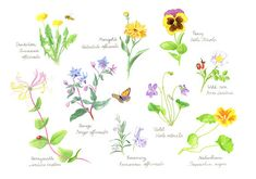 Of herbs, bees and seeds Nature Illustration, Edible Flowers, Seeds, Tv, Elder Flower, Nature, Television Set, Television