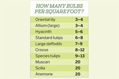 The math is simple: Figure the square footage of the space you wish to plant, then use our chart to determine the quantity of a specific bulb you'll need per square foot. Adjust quantities based on the size of your bulbs. Generally, top-size tulip bulbs are 12cm or larger in circumference; daffodils at least 16cm. So, for example, to plant a 10-square-foot bed with large tulip bulbs, multiply 10 × 6 for a total of 60 bulbs. Think of it as A (area) × B (bulbs) = C (color). |