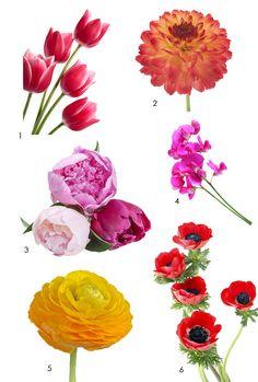 Spring Cutting Garden Flowers - 1. Tulips, 2. Dahlias, 3. Peonies, 4. Sweet Peas, 5. Ranunculus, 6. Anemones