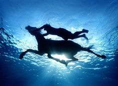 almost nothing is better than swimming with horses...