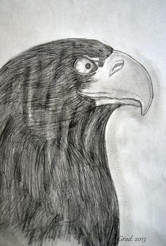 . From: Barbora Gradova https://www.facebook.com/Bagrrrr?fref=ts #Eagle #Sketch #Pencil #Black