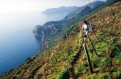 Trekking nel Parco Nazionale delle Cinque Terre, Liguria - © Enrico Bottino