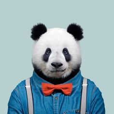 Yago Partal - Photography and Digital Illustration - Zoo Portraits The Zoo, Animals And Pets, Funny Animals, Cute Animals, Panda Bebe, Cool Panda, Panda Wallpapers, Panda Art, Bare Bears