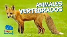 Animales Vertebrados | Videos Educativos para Niños
