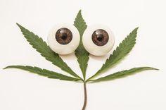 Glaucoom wordt al langer succesvol behandeld met medicinale cannabis. Diverse onderzoeken maken duidelijk hoe en waarom wiet een effectieve behandeling is voor de oogziekte.