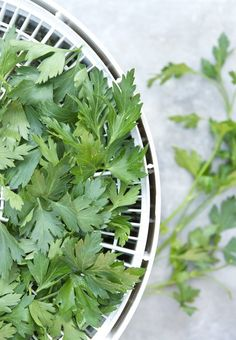 5 Smart Tips for Preserving Fresh Herbs — Tips from The Kitchn | The Kitchn