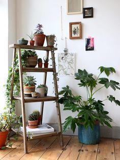 My Urban Jungle. #green #plants #home