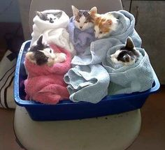 These cats deciding to have a spa day with their friends and not worrying about that guy texting back.
