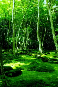 Carpet of moss at Giouji Temple, Kyoto, Japan