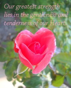 Our greatest strength lies in the gentleness and tenderness of our Heart RUMI