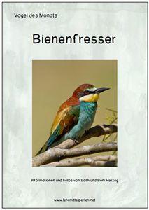 Vogel des Monats: Bienenfresser